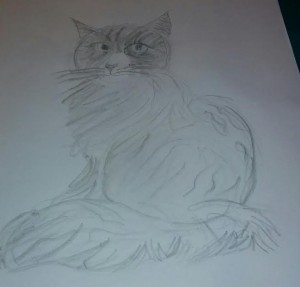 Cat Drawing (Florence,Gabrielle)