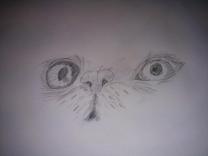 Cat Face Drawing (Florence,Gabrielle)